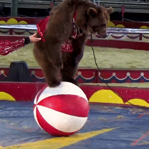 STOP 🚫 telling 🚫 kids 🚫 that 🚫 this 🎪 is 🐻 okay 😡 #BoycottAnimalCircuses
