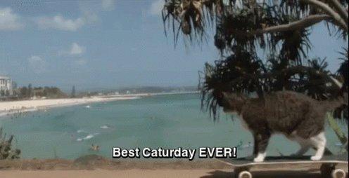 Catt McCreary's photo on #Caturday