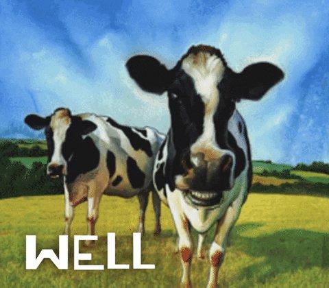devin nunes cow gif