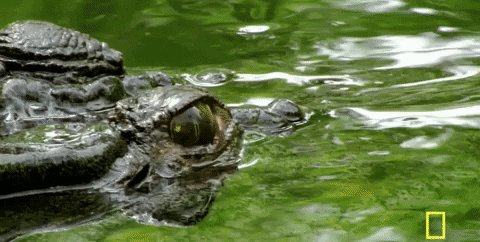 3/21 #MarchMadness #SurvivorPool @GreenPicksFREE Round of 64 - Day 1  Florida Gators +2 -108  Current Streak: 0