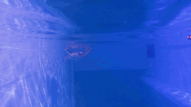 Clearwater Aquarium