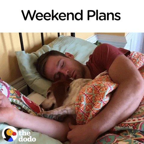 The Dodo's photo on #FridayFeeling