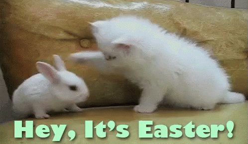 Soooo cute!!! #HappyEaster!! Jeanette Joy @JeanetteJoy can't wait for you to co-host #SundaySunsets!!  Ask Cathy about this gif...she just got a brand new cute bunny and she loves cats...this is for you @RoarLoudTravel 😉🌸😘 #Travel #Caturday