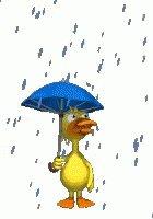 비가오는구먼..좋구만..