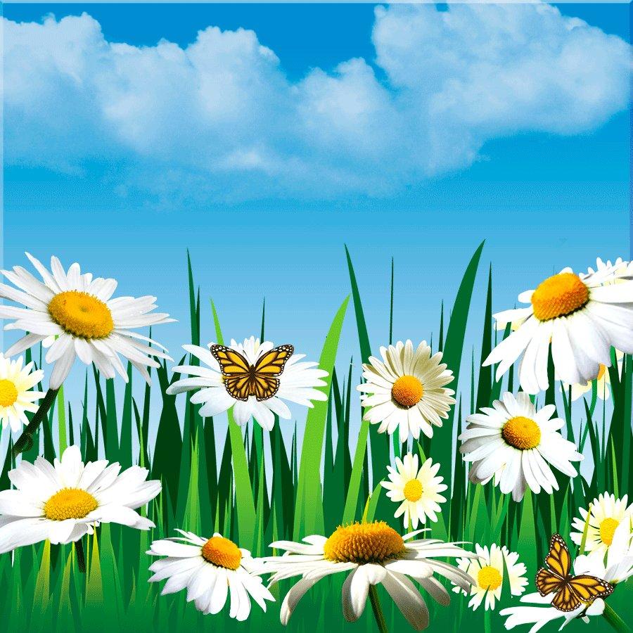 Летняя картинка анимация, открытки для цветов