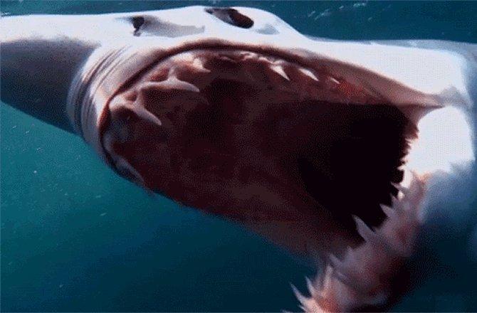 Image for the Tweet beginning: #SharkWeek 2019, Jul 28: So