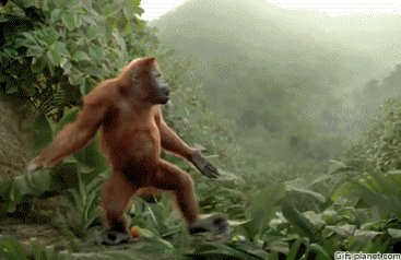 Aight dude but u better rematch that monkey tho lol