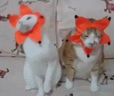 #CatTeachers