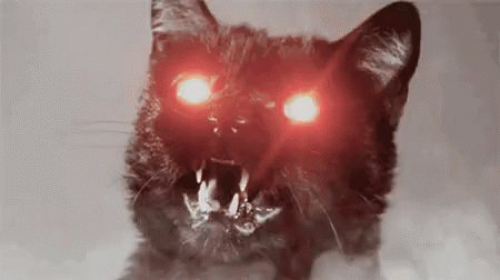 Image for the Tweet beginning: #CatTeachers Micheal has just gone to
