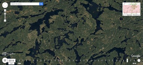 Image for the Tweet beginning: The boreal forest is thriving.