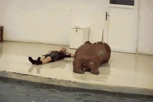 #OddCelebrityOctagonMatches Betty White vs The Geico walrus goalie