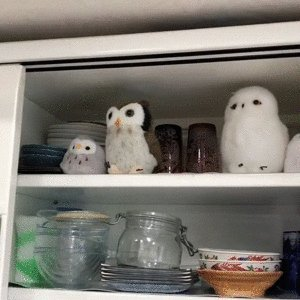Good morning Twitter-Friends...Happy Wednesday💗🦉🌸🌸