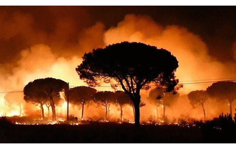 Dantescas #fotos del incendio de #DonanaArde  enviadas por nuestros co...