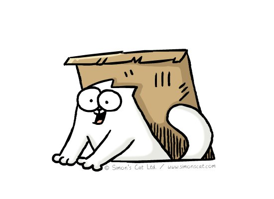 RT @emanuelaneri14: #InternationalCatDay 🐾  🐈🐈🐈🐈🐈🐈🐈🐈🐈🐈🐈🐈🐈  Greetings by Simon's Cat ♥️😽 https://t.co/8lJtXQKOGo