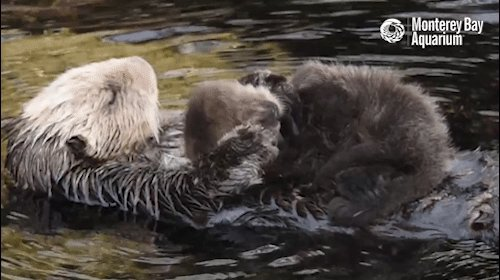 Sea otters?! Conservation works! #BePositiveIn4Words https://t.co/wVXD...