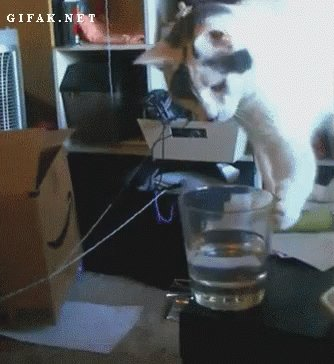 @AkvileDeFazio The earth can't be flat. If it were, cats would have knocked everything off it already. https://t.co/jzvEii9IuR