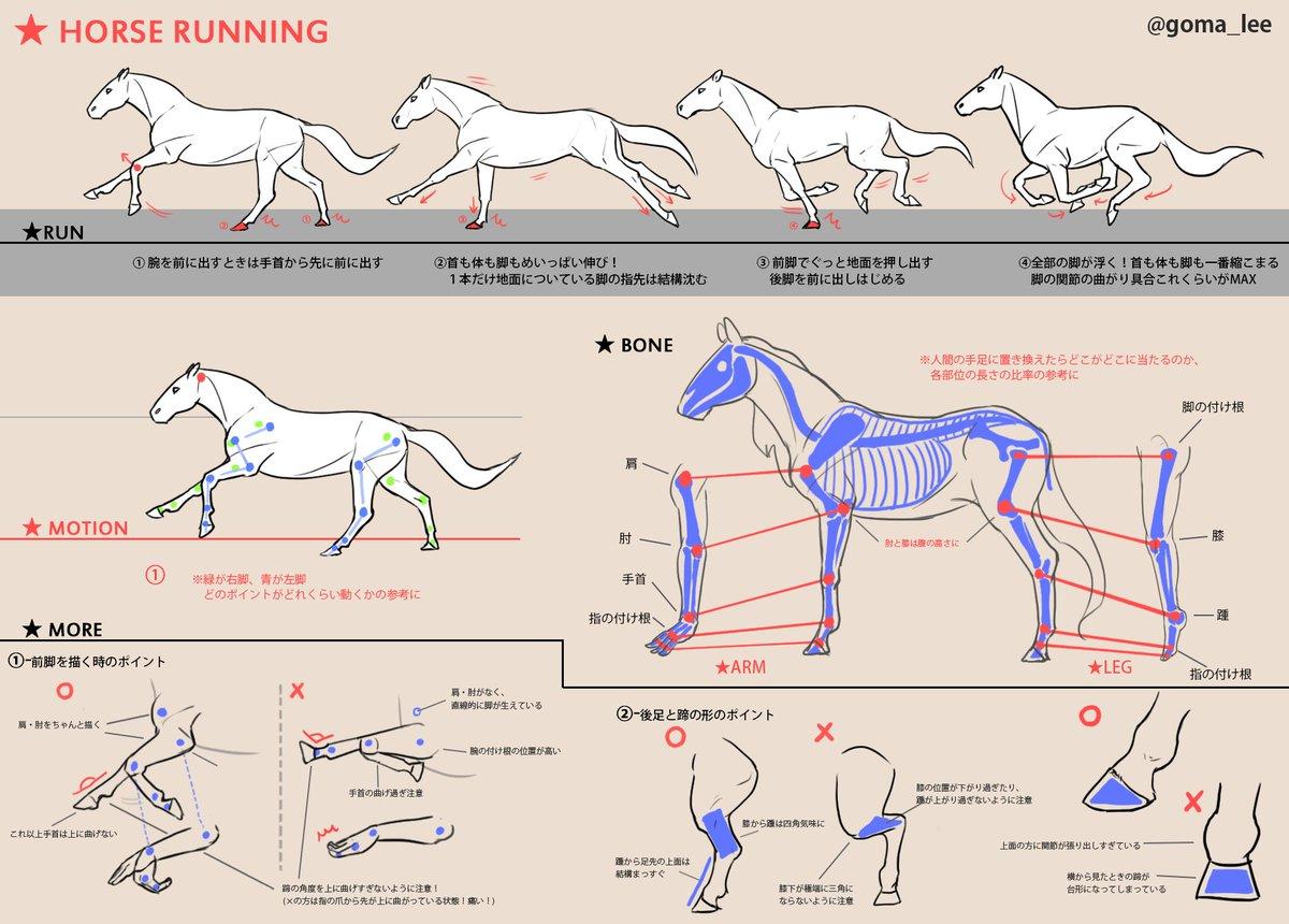 馬の走り方と脚の描き方覚え書き。形や動きなど個人的に気になるポイント詰めてみました🐎🐎 #howtodraw