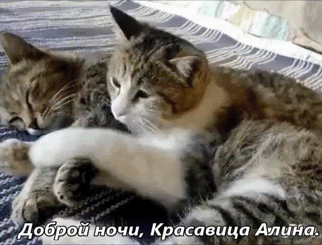 Гифы коты обнимаются