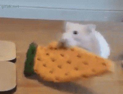 Похищение морковки