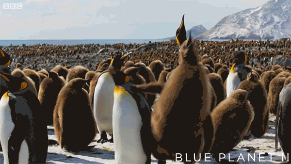 BBC Earth's photo on #WorldPenguinDay