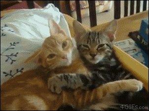 #BeatTheHolidayBluesBy having a cuddle w...