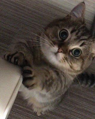 🐱😃🐱 #cats #gatitos #pets #animallover 🐱💚...