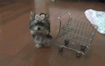 #HolidayShoppingIn3Words    Trolleys are...