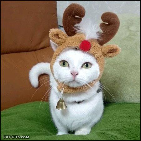 #SantaMePuedesTraer un reno como este ht...