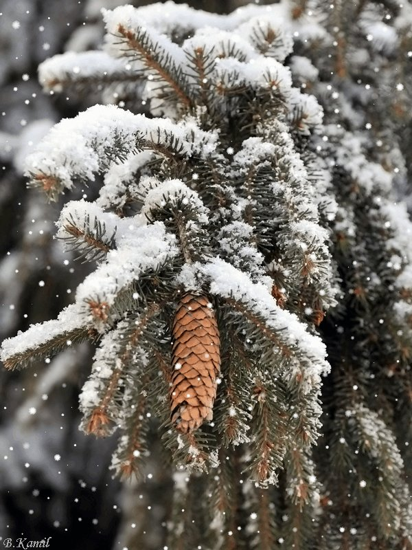 Живые картинки зима на телефон снег падает своем