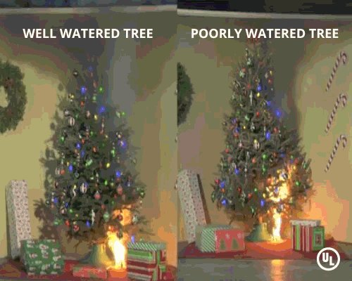 How quickly does a Christmas Tree fire spread? @ul_standards : national lighting bureau - azcodes.com