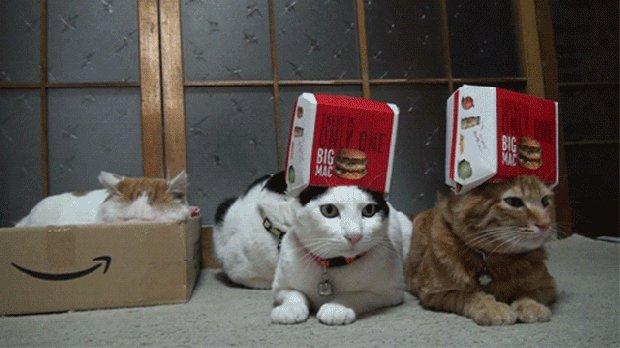 Открытки для, прикольные картинки с котами гифки