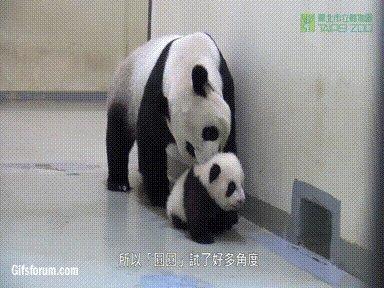 21 madres animales que han avergonzado a...