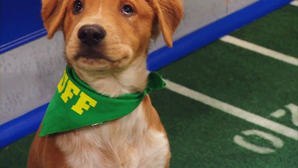 Puppy Bowl is really all that matters, t...
