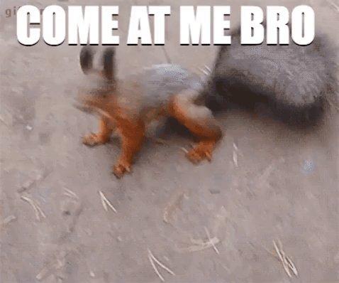 @demonsheep has nothing on huge #demonsquirrel #squirrel