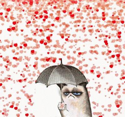 Grumpy Cat (@RealGrumpyCat) on Twitter photo 2018-02-14 17:30:34