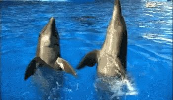 Mon pronostic ? #ipjdauphine evidemment ! GO Dolphins !! #tfiej18