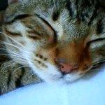 眠る姿が可愛すぎるw鼻ちょうちんを膨らませながら眠る猫w