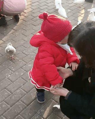 ハト 子供