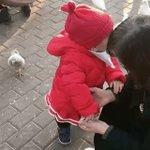 プロのハンターの動きwハトの首を鷲掴みしてエサを強奪する子供!