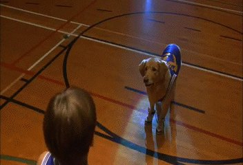 Anybody else find it interesting that @UMBCAthletics mascot is the #Retrievers - @DisneyStudios must have used some serious #DataScience & predictive analytics when creating that movie. Did Air Bud clear the way for the first 16 over 1 seed? #MarchMadness2018 #HackTheBracket