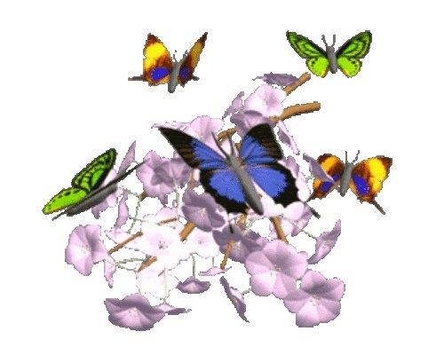 Бабочки летают анимация картинки