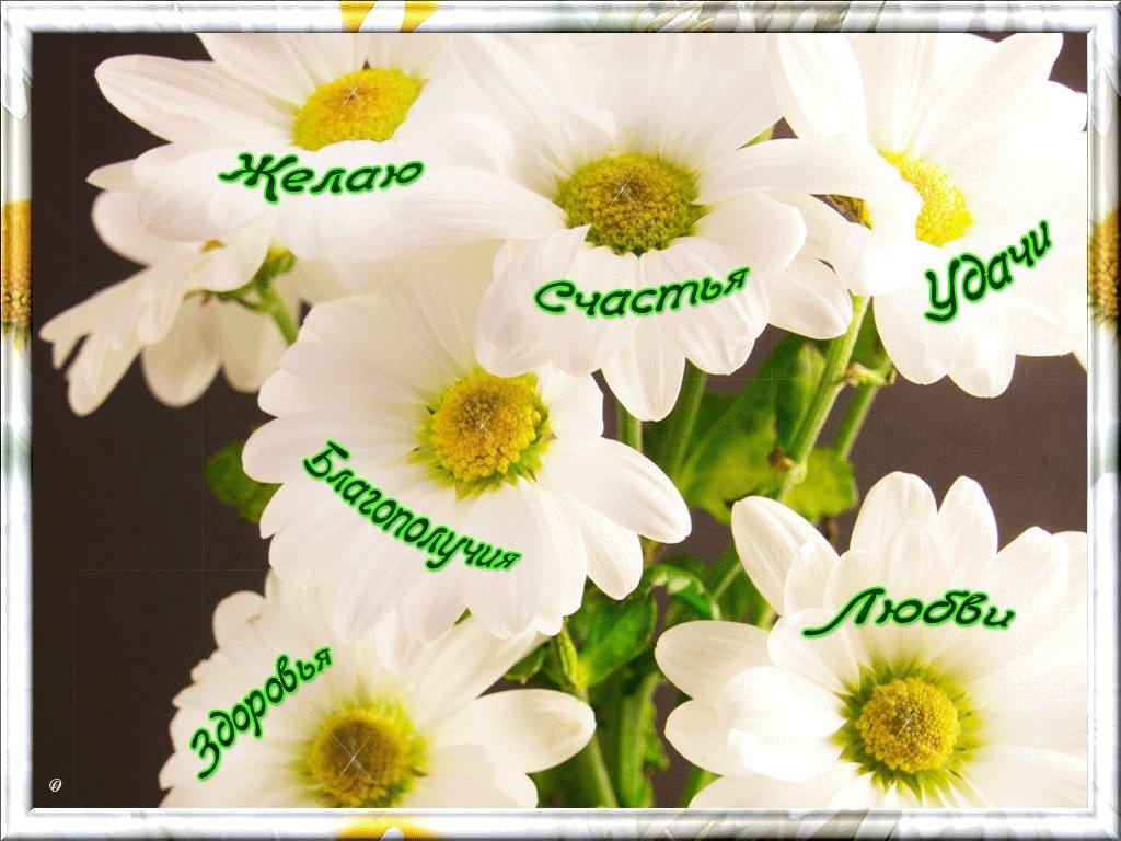открытки желаю счастья и добра любви удачи и тепла в прозе бинарные часы