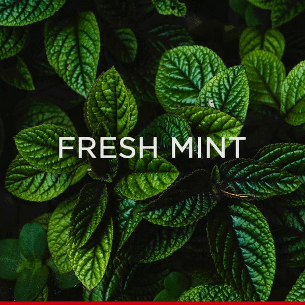Fresh Mint + Fresh Lime = Summertime from @EmpireCasino Empire Casino #SummerCocktails #drinks #cocktails #casino #EmpireCasino #London http://bit.ly/2Dbr7md