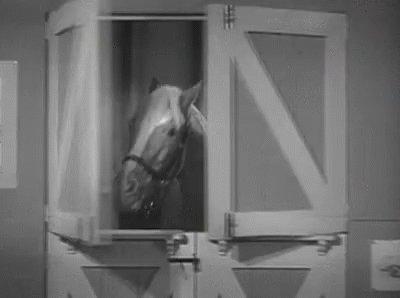 @grantstern's photo on stable genius