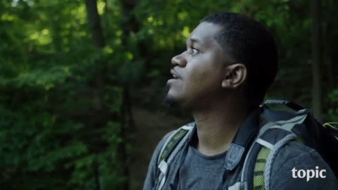I made this gif from @JasonWardNY's Birds of North America and it is such a birdwatching mood.