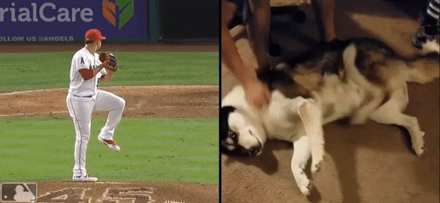 Hansel Robles vs a Siberian Husky, Mechanics.