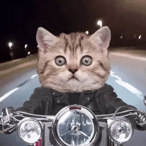 Sure there's a new #TopGun trailer and a new #ITChapterTwo trailer but ALL WE WANT IS #CatsMovie AND WE WANT IT NOW.