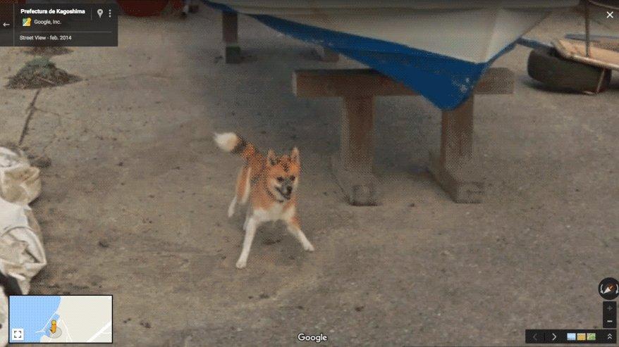 Persigue tus sueños como este perrito al coche de Google Maps 🐶