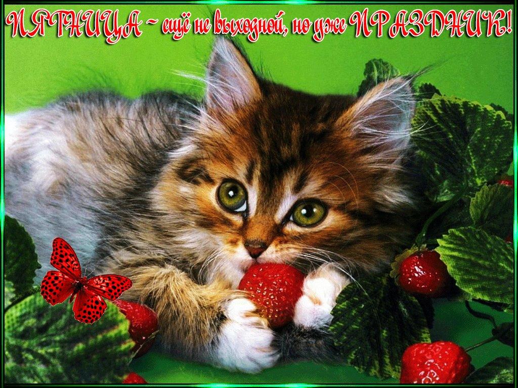 Красивые открытки порадовать