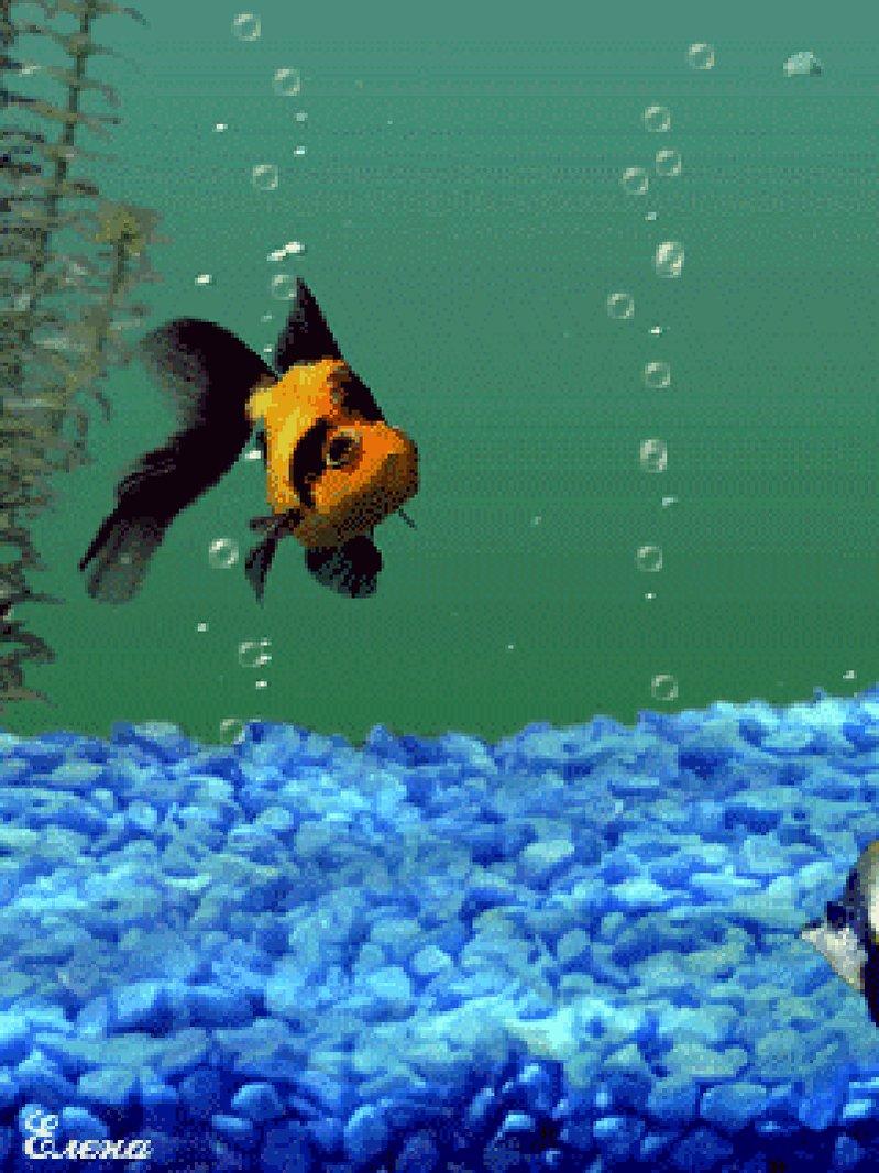 моментом рыбы анимация аквариум пушистая